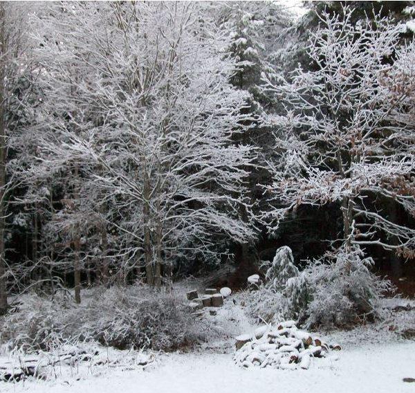 Davies Christmas Scene